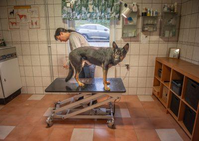 kustmarkens hundtjänst ab avel dressyr tjänstehund ledarhund 01