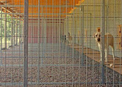 Hundgårdar Kustmarkens Hundtjänst avel dressyr ledarhundar